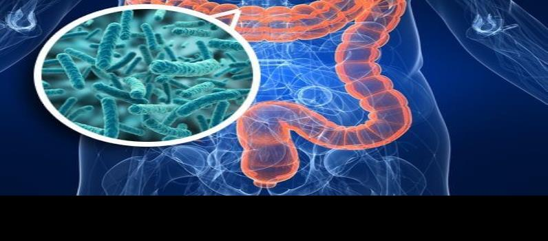 ¿Bacterias intestinales causan depresión?